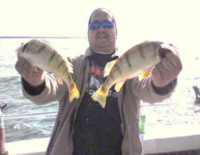 Yellow perch action on Lake Erie