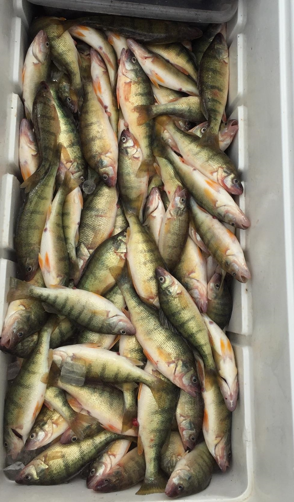 Lake Erie perch fishing, Port Clinton, OH